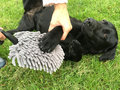 Doggy-Dry-Paw-Cleaner